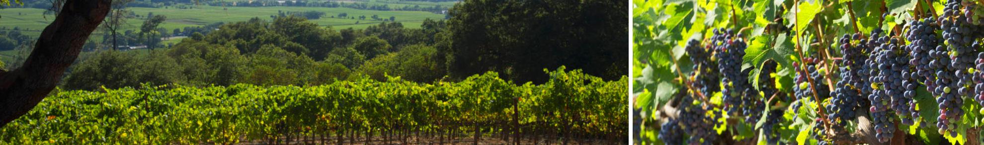 Alexander Valley Wine